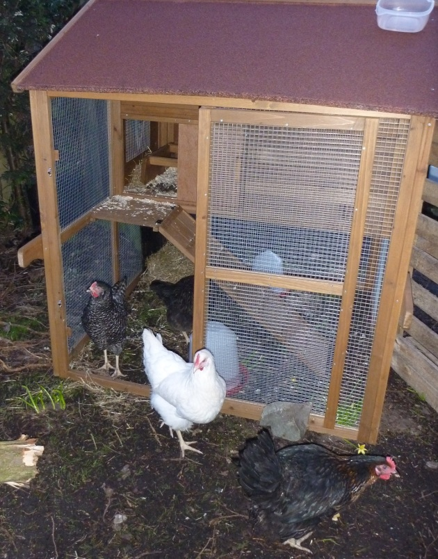 Early this morning they were allowed out to explour their new home.
